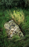 Rock and Grasses